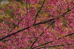 close-up van de natuur foto