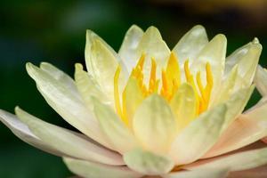 close-up lotus