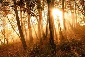 mystieke zonnestralen tussen bomen foto