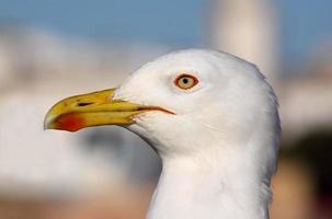 close-up van zeemeeuw foto