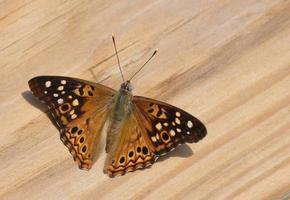 vlinder van dichtbij foto