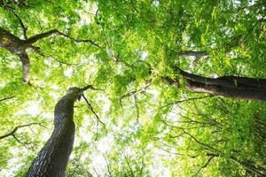 verse groene bomen