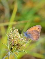 vlinder op een bloem foto