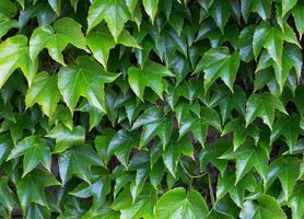 groene bladeren close-up