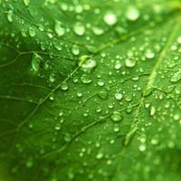 groene frisheid foto