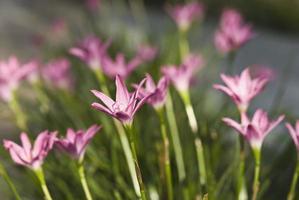 close-up van wilde bloemen foto