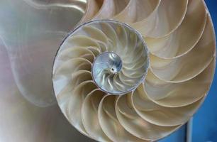 close up spiraal zeeschelp foto