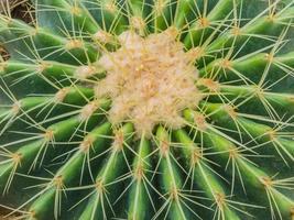 sluit omhoog van cactus