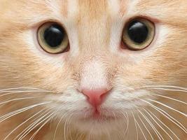 kitten close-up foto