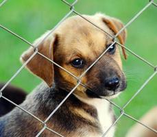schattige puppy's foto