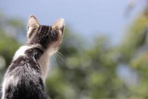de nieuwsgierigheid van de kat foto