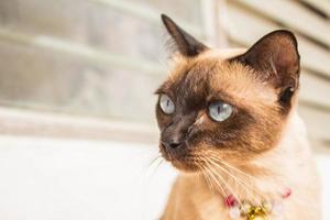 bruine kat foto
