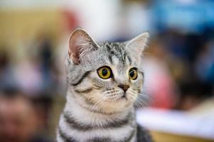 grappige kat foto