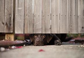 schattige hond mist haar baasje foto