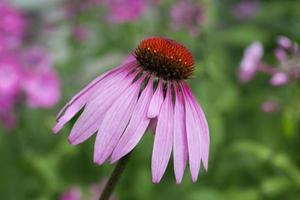 bloem kegel bloem glanzend foto