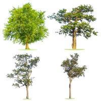 groene boom die in wit wordt geïsoleerd foto