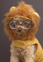 nerdy leeuw foto