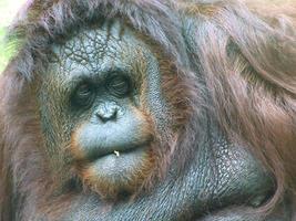 denkende aap foto