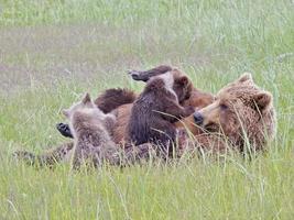 grizzly beer moeder verpleegsters welpen (1) foto