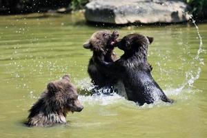 jonge grizzly beer foto