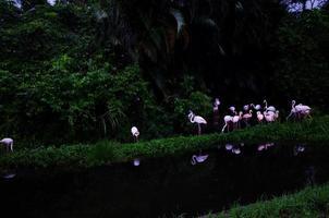 zwerm flamingo's op het meer foto