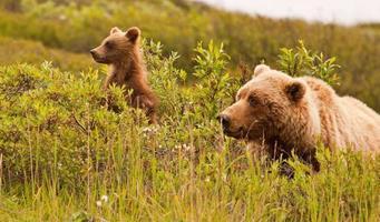 grizzlybeer en zijn welp opzij kijkend