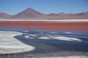laguna colorada met flamingo's die voeden in bolivia foto