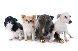 vier honden foto