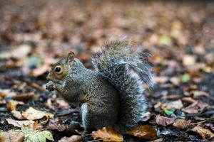 herfst eekhoorn foto