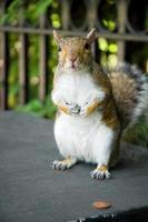 eekhoorn met stuiver foto