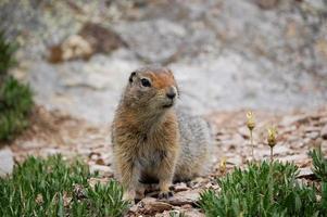 grond eekhoorn