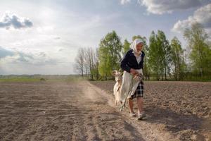 Oekraïense senior vrouw en geit foto