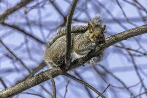 eekhoorn die in de winterzon zonnebaadt