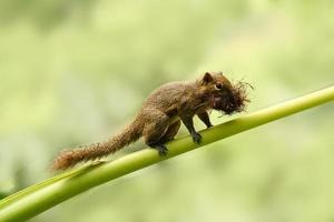 eekhoorn met een mondvol foto