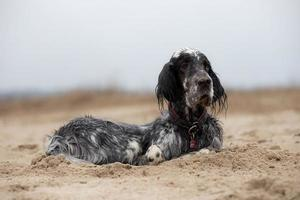 hond liggend op het strand foto