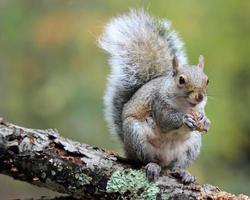 gelukkige eekhoorn