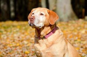 hond in de herfst foto