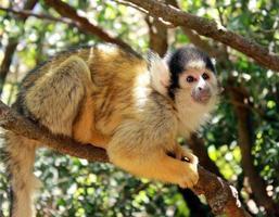 schattige eekhoorn aap foto