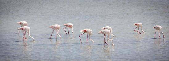 flamingo's camargue provence foto