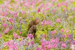 bloemen bekijken van ezorisu