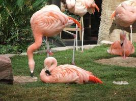 roze voelen? foto