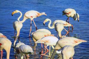 pakje roze flamingo's foto