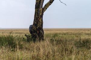 verstopte olifant foto