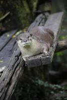 otters foto