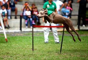 hond springen foto