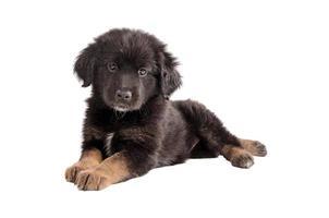 schattig zwart en bruin pluizig puppy op wit foto