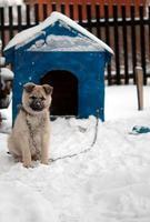 grappige hond foto