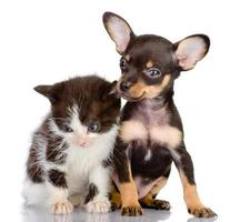 triest kitten en lachende hond foto