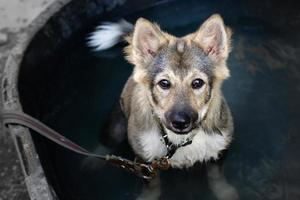 binnenlandse puppy hond foto