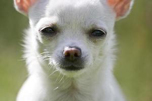 coole hond foto
